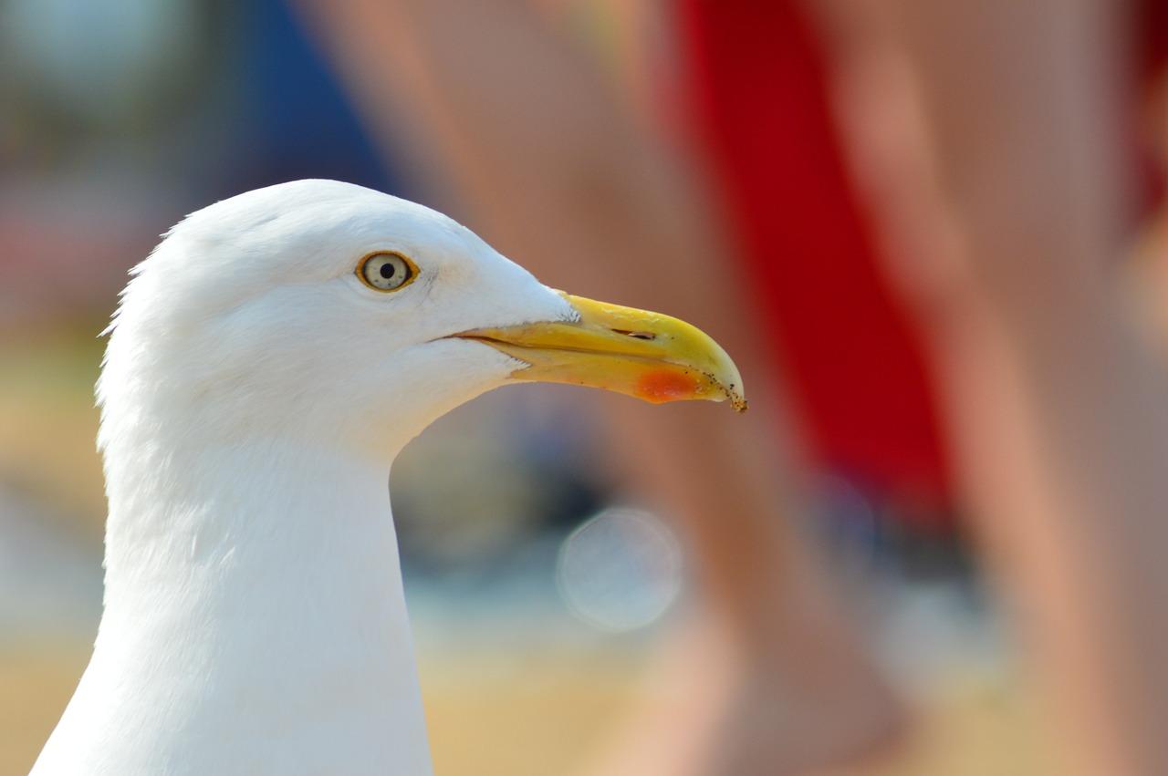 seagull-183229_1280